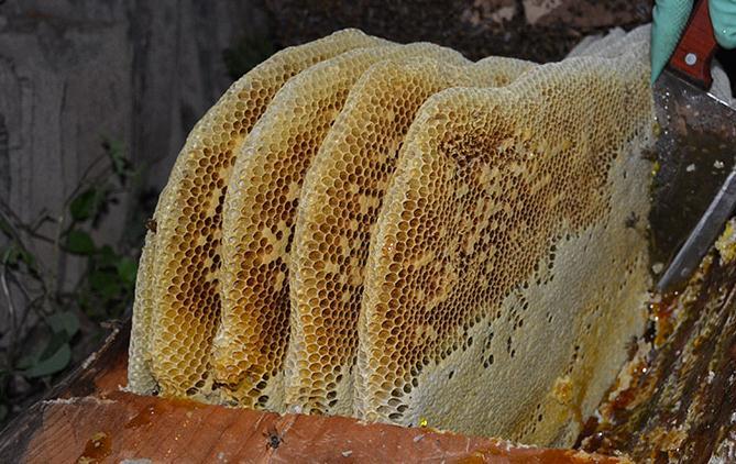 蜂巢蜜跟蜂蜜的区别