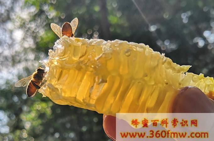 纯蜂蜜有毒吗?蜂蜜有毒性吗?
