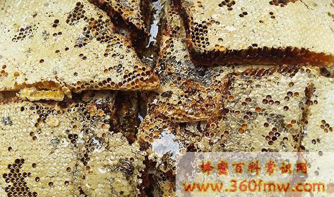 蜂巢蜜蜂巢可以吃吗