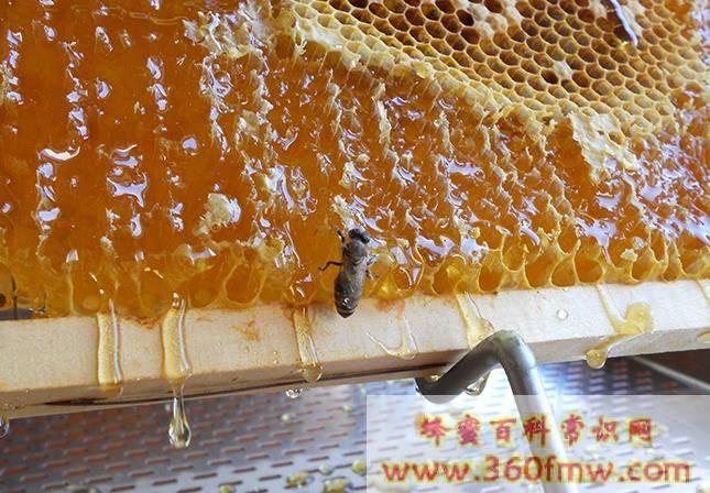 荆条蜜和槐花蜜哪个好