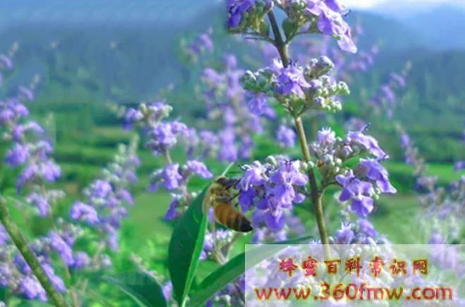 养蜂业未来发展趋势前景分析