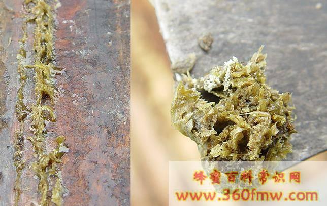 青海省市场监管局蜂产品抽检:14批次蜂产品全部合格