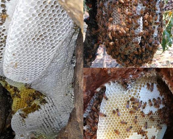 蜂蜜的价格:真正的土蜂蜜多少钱一斤?