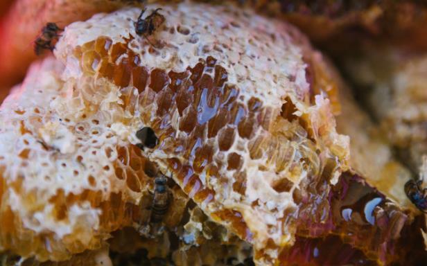 树洞蜜是什么?树洞土蜂蜜