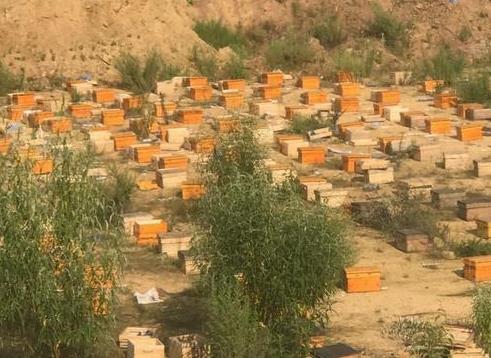 云南高原成熟百花蜜将亮相国际蜂业展览会