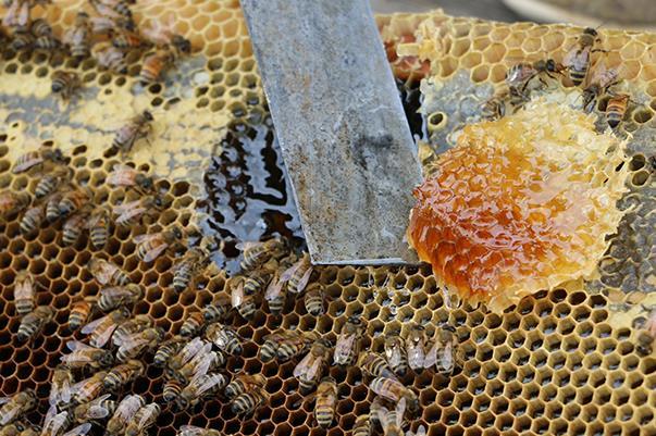 喝土蜂蜜有什么好处