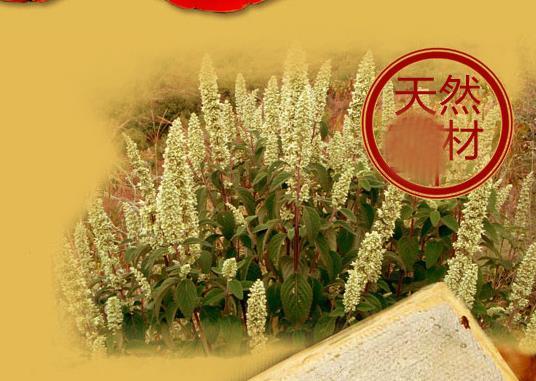 野坝子蜂蜜蜜源植物野坝子什么时候开花?野坝子的分布情况