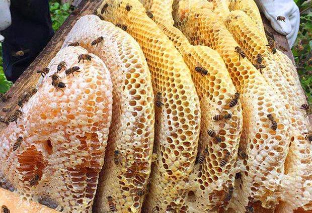陕西蜂产品抽检:天滋源土蜂蜜上不合格名单