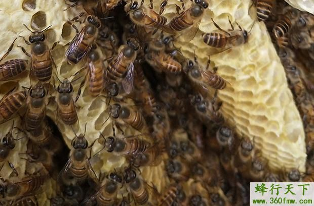 养殖蜜蜂营养补给之水