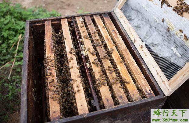 蜜蜂喂什么营养最好