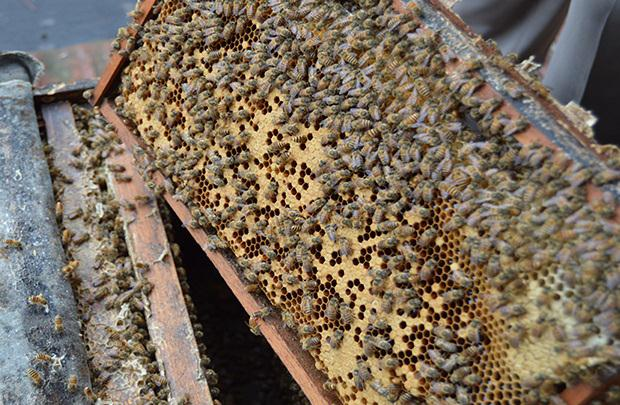 蜂蜜是怎么来的