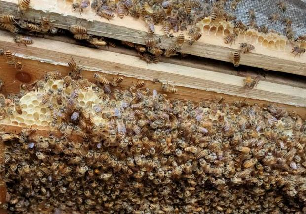 很多蜂农都会喂蜜蜂白糖水,为何没人敢说不使用白糖?
