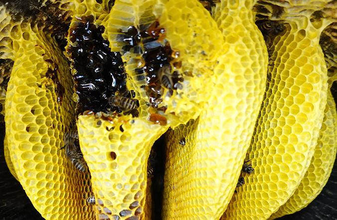 云南黑蜂蜜到底是真是假