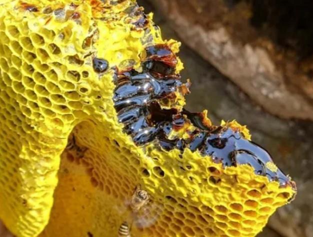 喝蜂蜜水为什么口有点酸