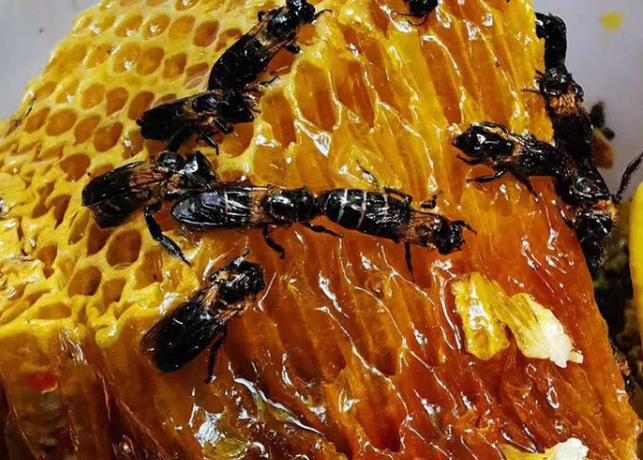 蜂蜜有多少种类