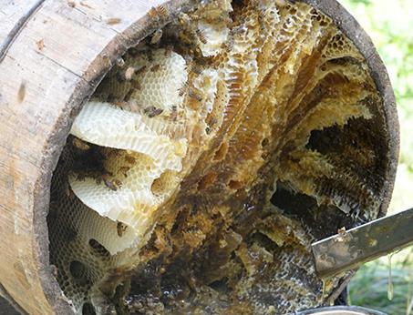 土蜂蜜为什么越来越难卖