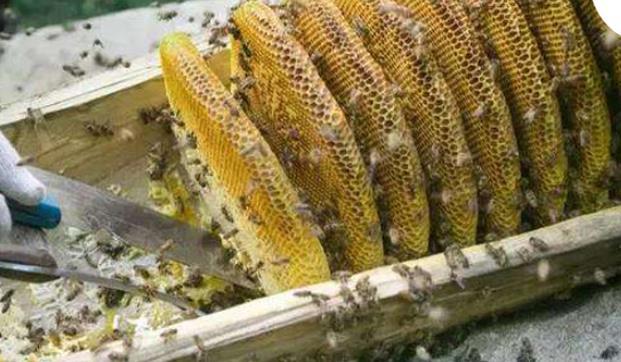 一脾蜜蜂春季怎么快速繁殖